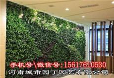 城市園丁鄭州室內植物墻-河南城市園丁園藝