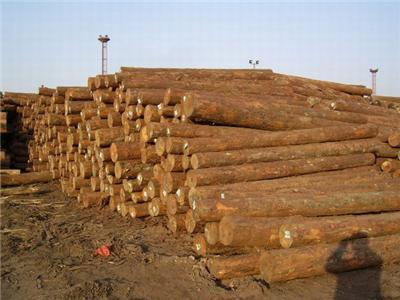美国一级铁杉厂家直销环保耐久