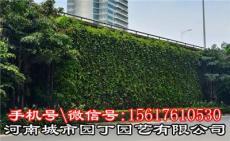 河南城市園丁園藝有限公司 室內鄭州酒吧綠