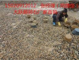 东营广饶县鹅卵石 优质厂家推荐