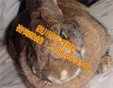 自貢雜交野兔 自貢雜交野兔養殖優勢 野兔