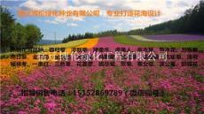 從三月到五一開花的草花品種