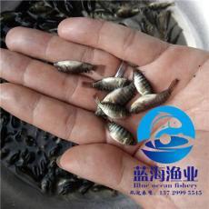 广东蓝海渔业苗场直销优质罗非鱼苗吉富奥尼