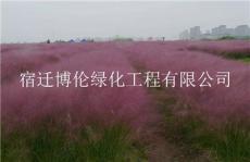 觀賞草種子有哪些品種