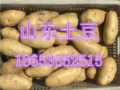 山东荷兰土豆批发