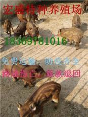 野猪苗多少钱野猪养殖野猪养殖场