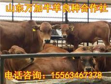 全國黃牛價格
