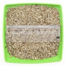混播草種有哪些品種黑麥草狗牙根