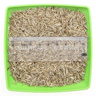 混播草种有哪些品种黑麦草狗牙根