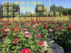 護坡四季青種子多少錢一斤