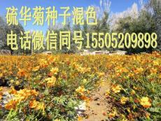 高羊茅種子一斤種子種多少地