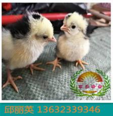 供應廣東鴕鳥苗 孔雀苗 野雞苗 綠殼蛋雞