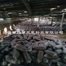 山东冠县灵芝菌种食用菌菌种