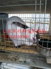 杂交野兔新西兰肉兔八点黑肉兔的价格