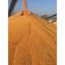 蜀窖声誉酿酒公司现款高价求购小麦玉米高梁