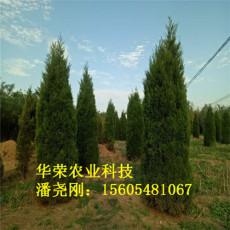 產地1.5米蜀儈價格2.5米蜀儈價格4米蜀儈