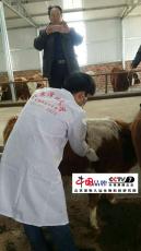 抗运输应激产品  牛羊运输用什么预防