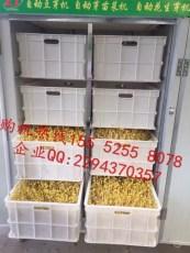 新余自动豆芽机生黄豆芽的设备智能豆芽机