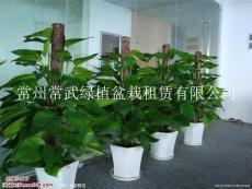 花卉租赁-常州绿植盆栽租摆价格便宜公司