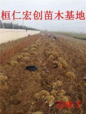 遼寧五味子苗繁育基地