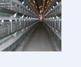层叠的鸡笼子门加固设计