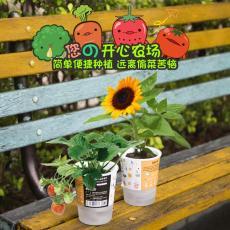 ecoey創意禮品樂樂盆栽塑料植物工藝品盆栽