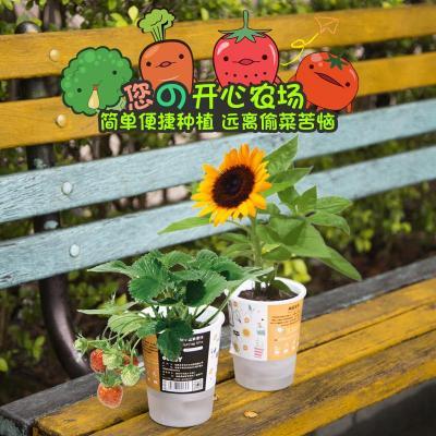 ecoey创意礼品乐乐盆栽塑料植物工艺品盆栽