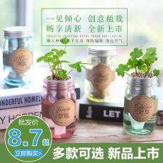 ecoey新品彩虹杯迷你盆栽微景觀玻璃杯植物