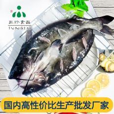 開背鮰魚供應 安徽三珍食品廠家直銷 清江魚