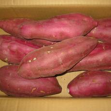 金秋十月板栗紅薯上市
