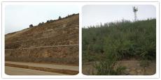 河南景绣三维网喷播植草护坡技术领先