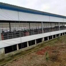 河南篷布廠家供應養殖場卷簾牛棚卷簾布設計