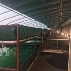 帆布水池图片 养殖鱼池帆布尺寸定做 养鱼池