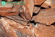 供應松樹皮木片火山石濾料填料優質松樹皮