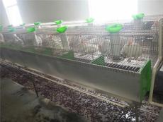 肉兔兔籠商品兔設備兔子刮糞工具