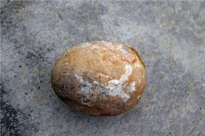鑒定蛋化石的機構在哪里