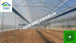 生态阳光玫瑰葡萄栽培葡萄设施大棚种植