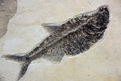 鱼化石国内行情报表