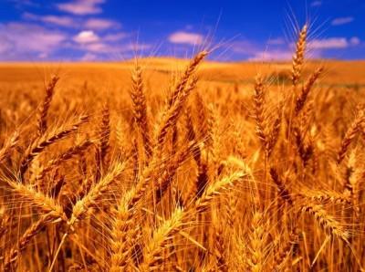 小麦玉米高梁