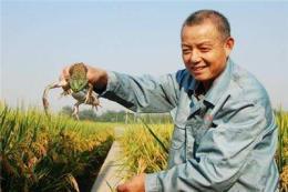 滨海县江苏宿迁泰通青蛙养殖有限公司优惠价多少