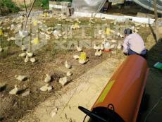 养殖大棚取暖设备快速升温效果好小鸡不再冷