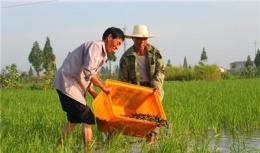 高效泥鳅养殖市场河南省高效泥鳅养殖高效泥鳅养殖技术