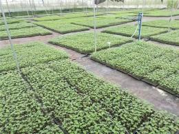 地布除草透氣透水遮光耐用園藝設施大棚配件