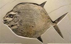 鱼化石在哪里鉴定能出证书