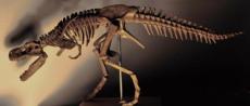 恐龍化石市場如何評估