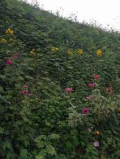 河南景绣承接边坡绿化 矿山治理 绿化草坪