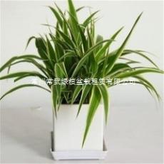 常州租花-常州绿植租摆-常州盆栽租赁公司