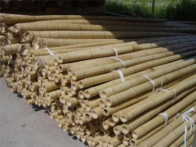 成都竹竿批发 琴丝竹篱笆竹隔断竹防霉防腐