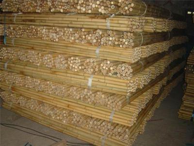 成都竹竿批发 琴丝竹干竹子竹杆装饰竹