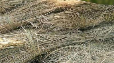 成都稻草干草供应草堆草垛园林装饰景观稻草